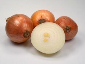 Zwiebeln - Allium cepa